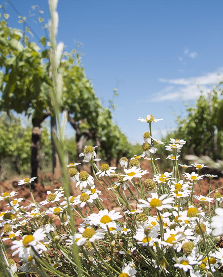 Vinogradi su naše blago, pa uživajte u njihovoj ljepoti i vrhunskimvinima lokalnihvinara